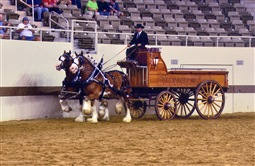 Jethro & Huck - Winning Junior Team at the Clydesdale Nationals 2014
