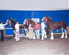 2014 Winning Geldings at The Royal Winter Fair